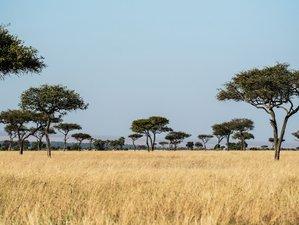 Habitat: Savannah
