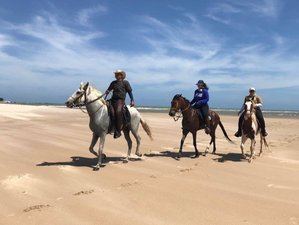 9 Day Coconut Trail Ride Horse Riding Holiday in Alagoas