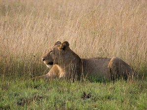 3 Days Queen Elizabeth National Park Safari in Uganda