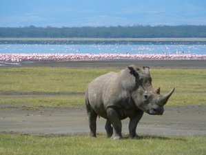6 Days Amazing Wildlife Safari in Kenya