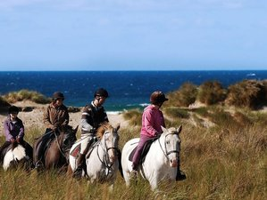 7 Days Adult Private Group Horse Riding Holiday Cornwall, UK (group of 6 - 8)