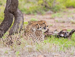 3 Days Affordable Tented Kruger Park Safari in South Africa