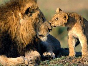3 Days Masai Mara Mid-Range Safari in Kenya