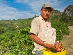 8 Days Flavors of Colombia Coffee Tours with GeoEx