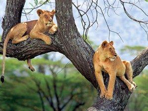 5 Days Serengeti Ngorongoro, Tarangire & Lake Natron