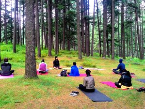 8 Day Seven Chakra Journey with Yoga, Meditation, Breath & Bodywork in Himalayas, Palampur (HP)
