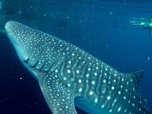 3 Day Cenderawasih Bay National Marine Park Whale Sharks Watching Safari in Nabire, Papua