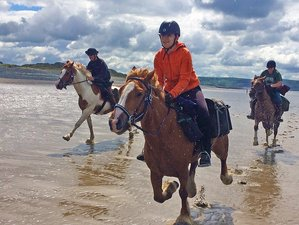 6 Days Flagship Border to Coast Trail Horse Riding Tour in Wales, United Kingdom