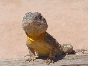 8 Day Affordable Wildlife Tour Western Australia, Australia