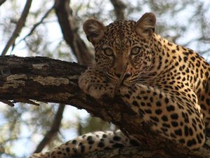 3 Days Amazing Safari in Kruger National Park, South Africa