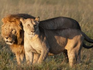 3 Days Safari Holiday in Tarangire, Lake Manyara, and Ngorongoro, Tanzania