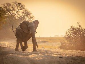 10 Days Okavango Delta, Moremi, Chobe, Victoria Falls Safari in Botswana, Zimbabwe, and Zambia