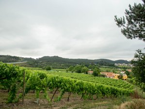 4 Days Sparkling Wine Holiday in Norte, Portugal