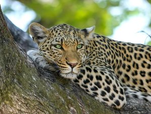4 Days Big Five Camping Safari in Northern Tanzania