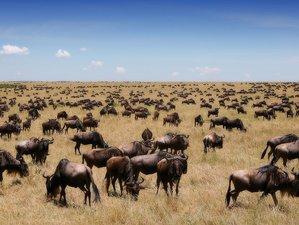 3 Days Outstanding Masai Mara Safari in Kenya