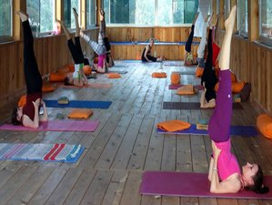 28 Days 200 Hr Ashtanga Vinyasa Yoga Teacher Training in Rishikesh, India