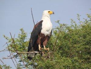 12 Days Birdwatching Tour Safari in Ethiopia