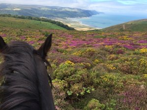 3 Days Fantastic Horse Riding Holiday in Exmoor, England, UK