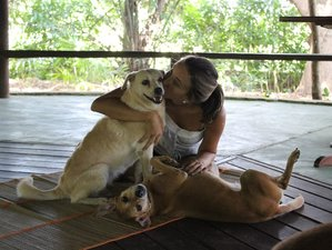 7 Days Creative Nature Yoga and Meditation Holiday with Healing Dogs in Bahia, Brazil