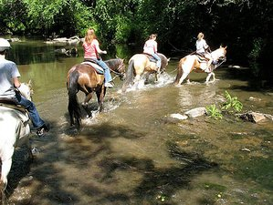 6 Day Heartland Week-Long Retreat Horse Therapy Holiday in Spring Mills, Pennsylvania