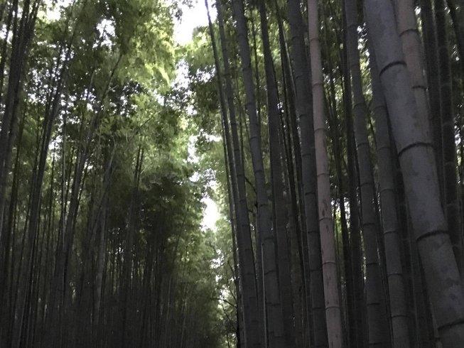"""9 jours en stage de yoga """"floraison des cerisiers"""" à Izu, Japon"""