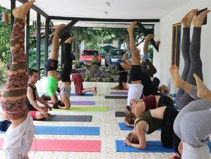 21 días, 300 horas de profesorado intensivo de yoga en Cali, Colombia