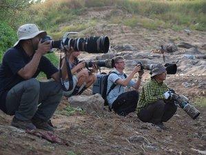 15-Daagse Fotosafari en Vogels Spotten in Ghana