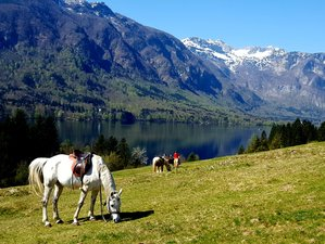 8 Days Alpine Fairytale Horse Riding Holiday in Slovenia