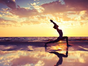 5 Day Yoga, Detox, and Fitness Retreat near North Sea in North Holland