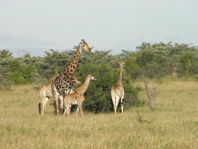 8 Days Migration Safari in Kenya