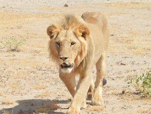 4 Days Big 5 Encounter Safari in Masai Mara and Lake Nakuru National Park, Kenya