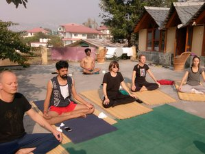 5 Day Detox, Meditation, and Yoga Retreat in Sidhbari, Dharamshala