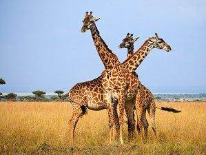 4 Days Kenya Safari in Lake Nakuru & Maasai Mara