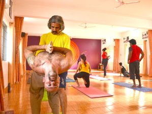 28 days Mysore Style Hatha Yoga Classes in India