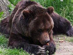 14 Days Danube Delta Wildlife Tour in Romania