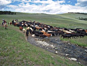 6 Days September Cattle Drive Ranch Vacation in Sheridan County, Wyoming