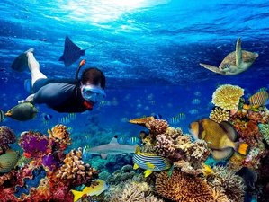 9 Day Explore Marine Life: PADI Discover Diving Tour in West Coast, Down South, Sri Lanka