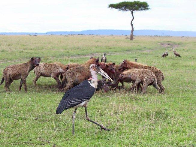 2 Days Salt Lick Game Safari in Kenya