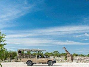 3 Days Onguma Safari in Namibia