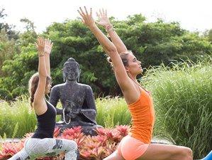 8 Day Tropical Island Getaway Yoga Retreat in Maui, Hawaii