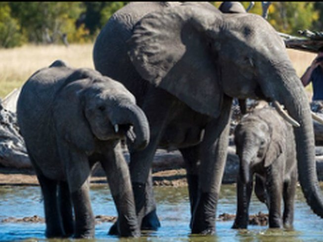 19 Days Intimate South African Safari