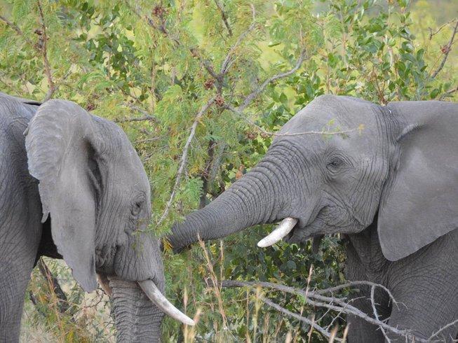 2 Days Big Five Safari in South Africa