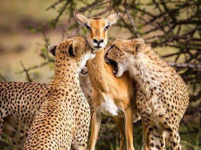 2 Days Kenya Wildlife Safari