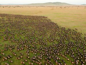 4 Days Ndutu to Ngorongoro Crater Great Migration Safari in Tanzania