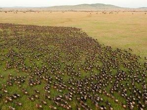 4 días en un safari para ver la gran migración de Ndutu a el cráter de Ngorongoro en Tanzania
