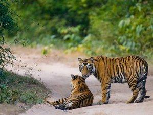 5 Day Jungle Safari in Tamil Nadu