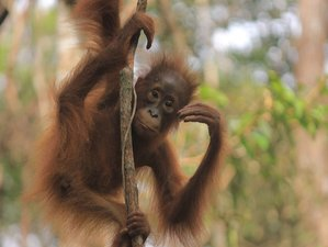 3 Days Orangutan River Tour in Tanjung Puting National Park, Indonesia