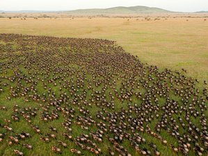 10 Days Kenya and Tanzania Wildebeest Migration Safari