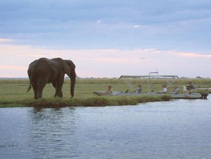 4 Days Chobe Fly-in Couples Safari in Botswana
