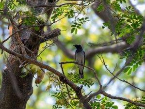 6 Days Koshi Tappu Wildlife Reserve Tour in Nepal